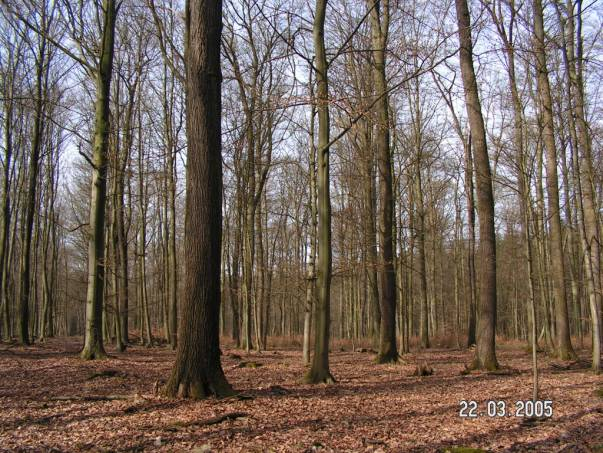 Esplingeroder Wald