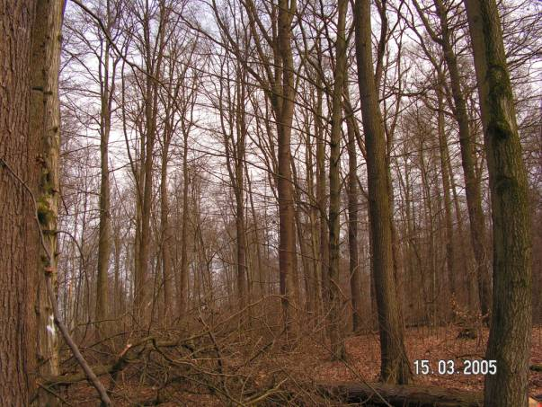 Mühlenberg (Nesselrödener Wald)