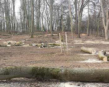 Ascherberg - SBöhner