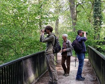 Birdrace - Grone - Sozialbrachvögel