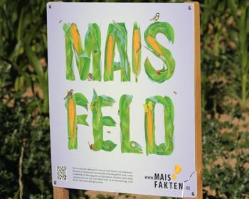 Maisfeld - klein