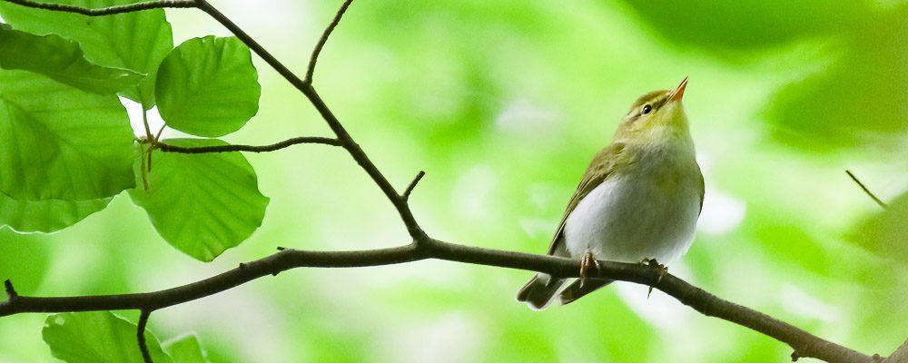 Ornithologie Göttingen