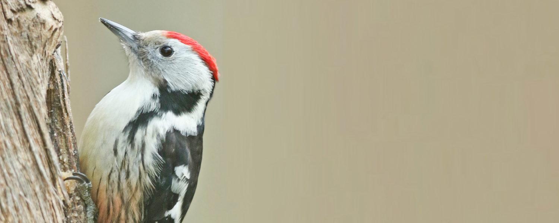 Arbeitskreis Göttinger Ornithologen